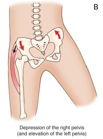 psoas iliaque role rotation
